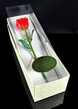 preserved rose giftboxed